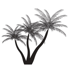 Palm silhouette EPS 10 vector image
