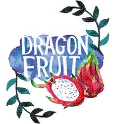 Watercolor with dragon fruit vector