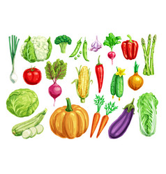 Vegetable watercolor set for healthy food design vector