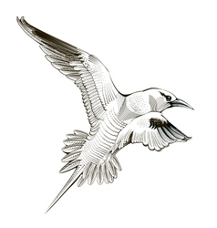 Line seagull engraving vector