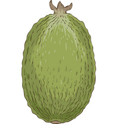 ripe whole feijoa vector image vector image