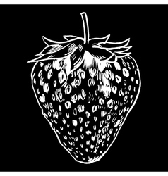 strawberry vintage berries vector image