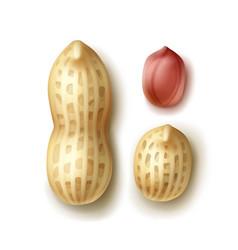 Set of peanuts vector