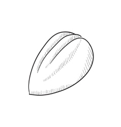 Almond sketch icon vector