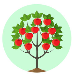 Apple tree with ripe fruits in vector