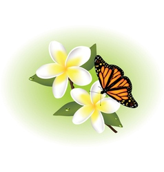 frangipani and butterfly vector image vector image