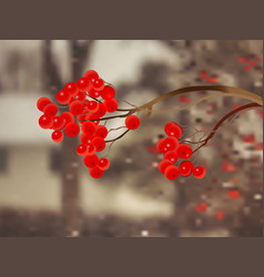rowanberry vector image