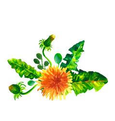 flowers dandelions watercolor vector image
