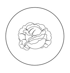 Cabbage icon outline single plant icon from the vector