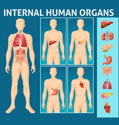 Cartoon human body internal parts concept vector
