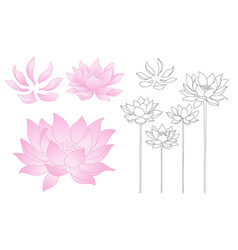 lotus flowers and petals vector image