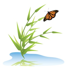 grass water and butterfly vector image