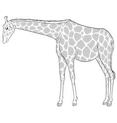 A sketch of a giraffe vector