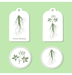 Silhouette of panax ginseng with leaves and root vector