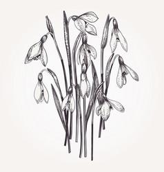Bouquet of snowdrops vector