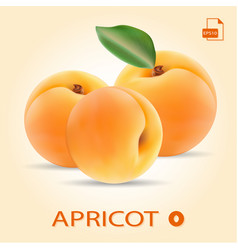set of three fresh apricots with leaf vector image vector image