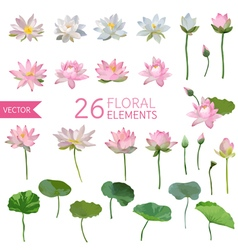 Vintage Waterlily Flowers in Watercolor Style Set vector image