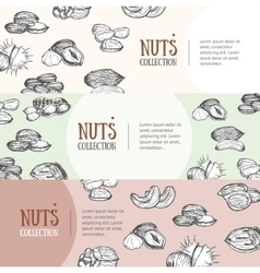 Nuts package design banner set vector