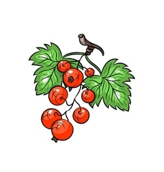 currant on white background vector image vector image