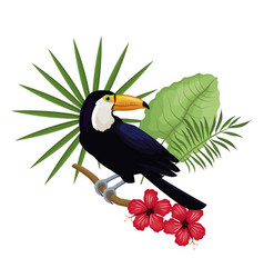 Toucan hibiscus branch palm leaves vector