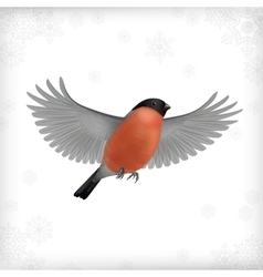 Winter christmas flying bird bullfinch vector