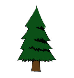 Pine tree foliage trunk forest vegetation icon vector