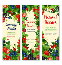 Fresh berries and fruits banners set vector