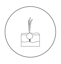 onion icon outline single plant icon from the big vector image vector image
