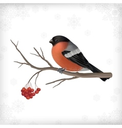 Winter bird bullfinch tree branches vector
