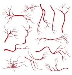 Human eye veins vessel blood arteries isolated vector