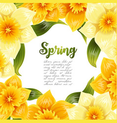 Elegant background with yellow daffodil narcissus vector