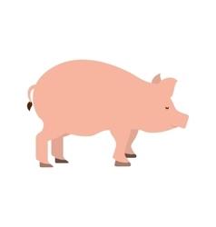 Pig farm animal isolated icon vector