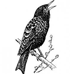 bird sturnidae vector image