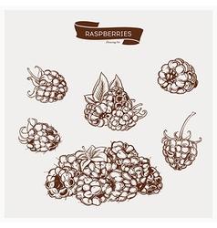 Raspberries drawing set vector image vector image