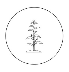 Corn icon outline single plant icon from the big vector