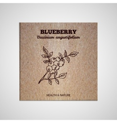 Herbs and spices collection - blueberry vector