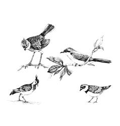 Wild exotic birds set vector image