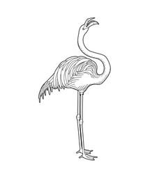 cute graphic flamingo vector image