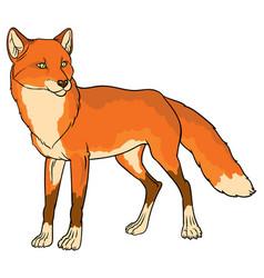 Naturalistic of fox vector