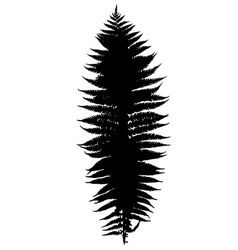 Fern silhouette vector image