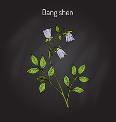 Codonopsis pilosula or dang shen or poor man s vector