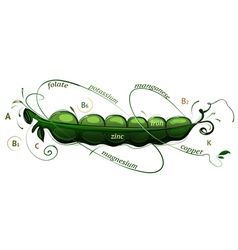Pea pod vitamins vector