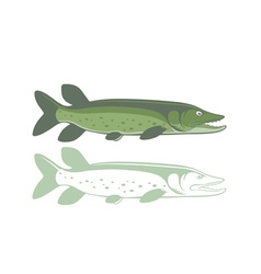pike fish vector image vector image