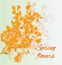 Forsythia spring flowers spring background vector