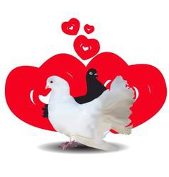 Love and pigeons vector image