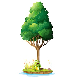 An island with a frog under the tree vector image vector image