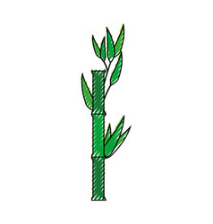 Bamboo japanese plant vector