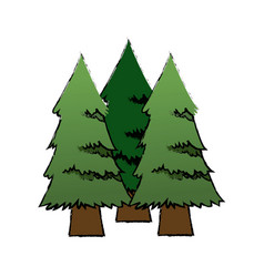 Three pine tree foliage trunk forest icon vector