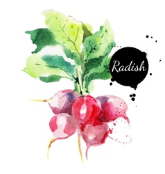 Radish with leaf Hand drawn watercolor painting vector image