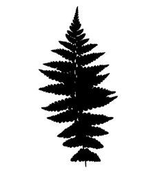 Fern silhouette vector